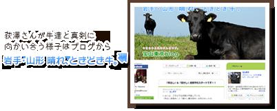 荻澤さんが牛達と真剣に向かい合う様子はブログから『岩手・山形 晴れ、ときどき牛。<br>』