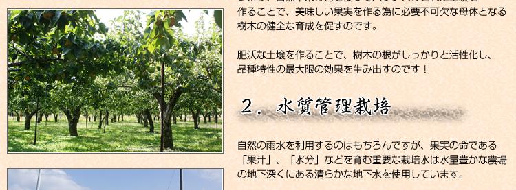 入江さんがこだわる果樹栽培