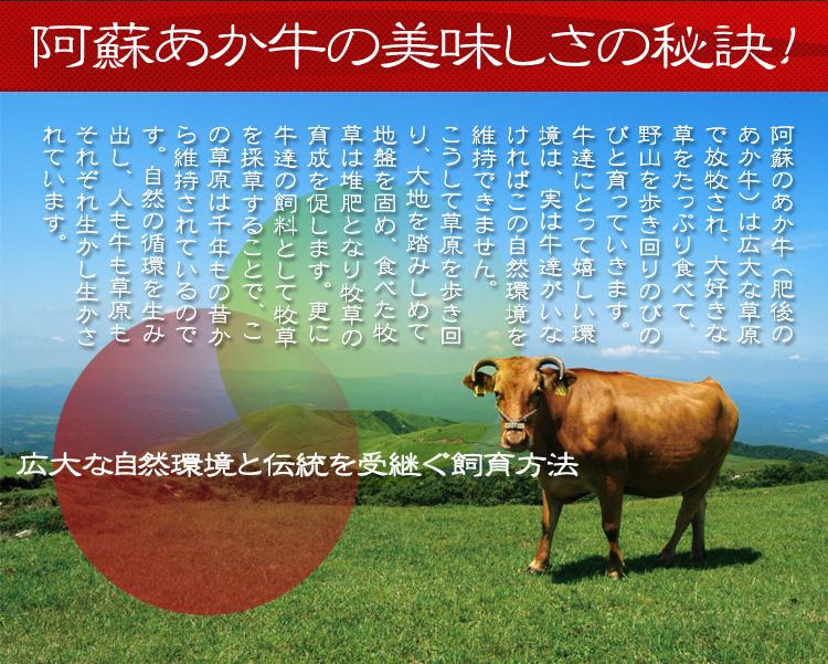 「阿蘇あか牛の美味しさの秘訣!」     広大な自然環境と伝統を受継ぐ飼育方法     阿蘇のあか牛(肥後のあか牛)は広大な草原で放牧され、大好きな草をたっぷり食べて、野山を歩き回りのびのびと育っていきます。牛達にとって嬉しい環境は、実は牛達がいなければこの自然環境を維持できません。こうして草原を歩き回り、大地を踏みしめて地盤を固め、また糞尿は堆肥となり牧草の育成を促します。更に牛達の飼料として牧草を採草することで、この草原は1,000年の昔から維持されているのです。自然の循環を生み出し、人も牛も草原もそれぞれ生かし生かされています。