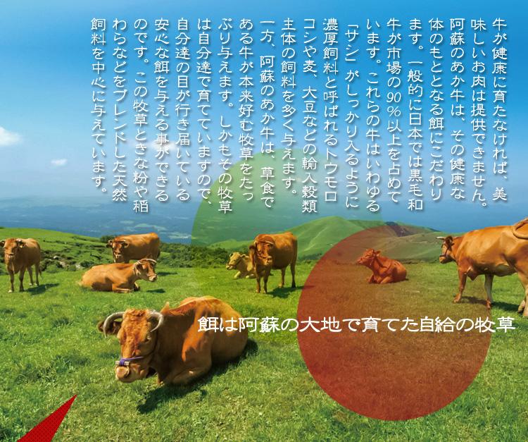 餌は阿蘇の大地で育てた自給の牧草!     牛が健康に育たなければ、美味しいお肉は提供できません。阿蘇のあか牛は、その健康な体のもととなる餌にこだわります。一般的に日本では黒毛和牛が市場の90%以上を占めています。これらの牛はいわゆる「サシ」がしっかり入るように濃厚飼料と呼ばれるトウモロコシや麦、大豆などの輸入穀類主体の飼料を多く与えます。     一方、阿蘇のあか牛は、草食である牛が本来好む牧草をたっぷり与えます。しかもその牧草は自分達で育てていますので、自分達の目が行き届いている安心な餌を与える事ができるのです。この牧草ときな粉や稲わらなどをブレンドした天然飼料を中心に与えています。
