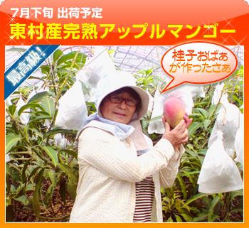 沖縄県東村産 完熟アップルマンゴー
