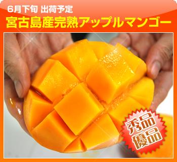 【送料無料】宮古島産完熟アップルマンゴー