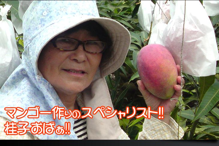 桂子おばぁの作る美味しい美味しい完熟アップルマンゴー!!